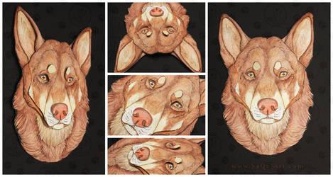 Commissions: 3D - Portrait - Red Lapponian Herder