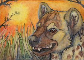 ACEO: Warm evening