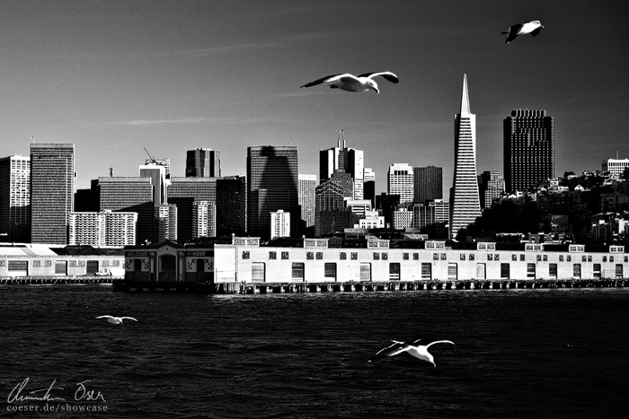Birds of San Francisco by Nightline
