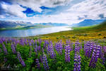 Iceland, Untitled 3