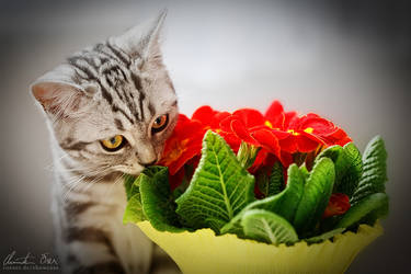 Cat meets flowers by Nightline