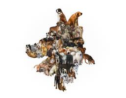 Interlocking Canines by BobbyBobby85