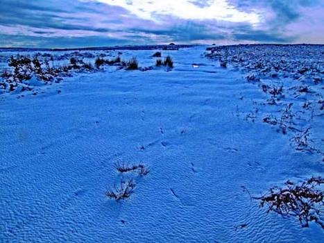 cefn bryn blue