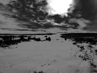 cefn bryn black and white