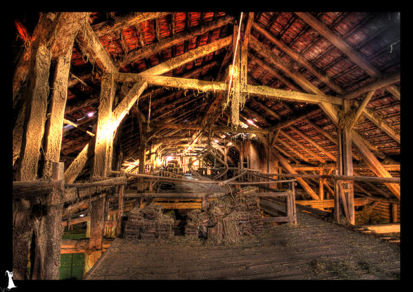 Inside Animal Barn