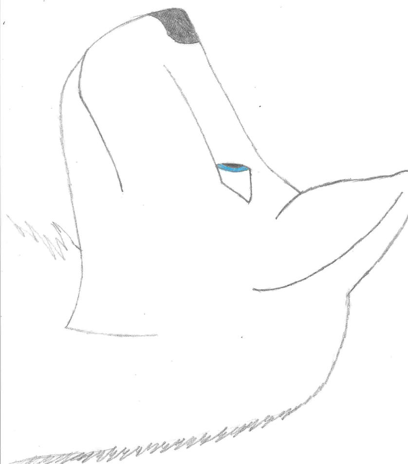 Wolf side view drawing - photo#52