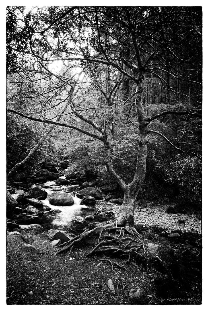 Tree beside river BW by The-BigGuy