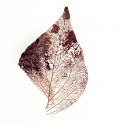 dead leaf by vw1956stock