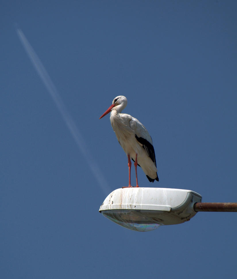 stork. by vw1956stock