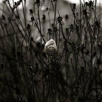 Lifeless Shell by ABXeye
