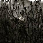 Lifeless Shell