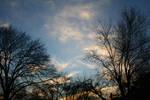 Evening Through Branches