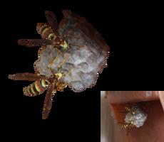 Wasp Nest by Nolamom3507