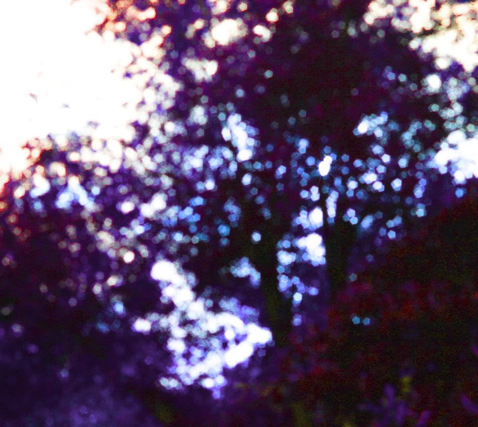Tree Bokeh by Nolamom3507