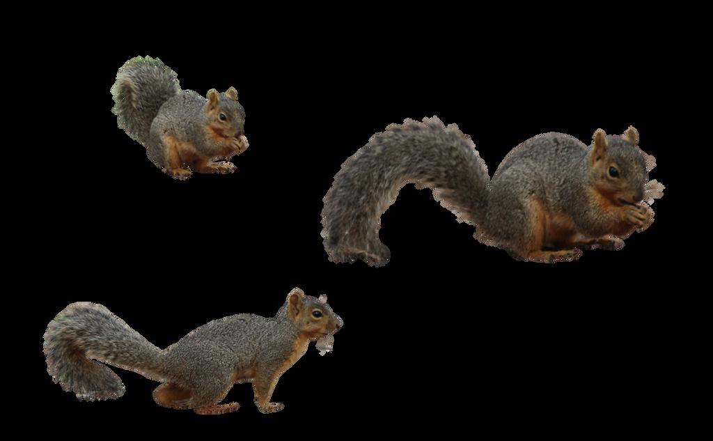 Busy Squirrel by Nolamom3507