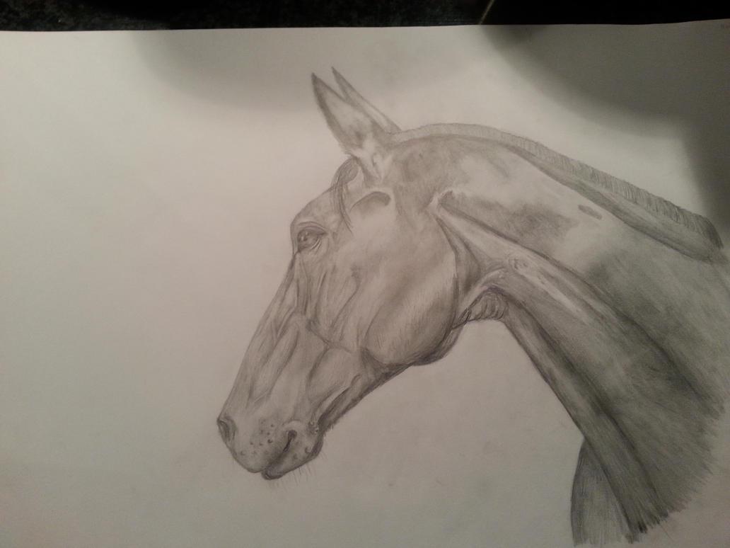 Horsehead by Venescona