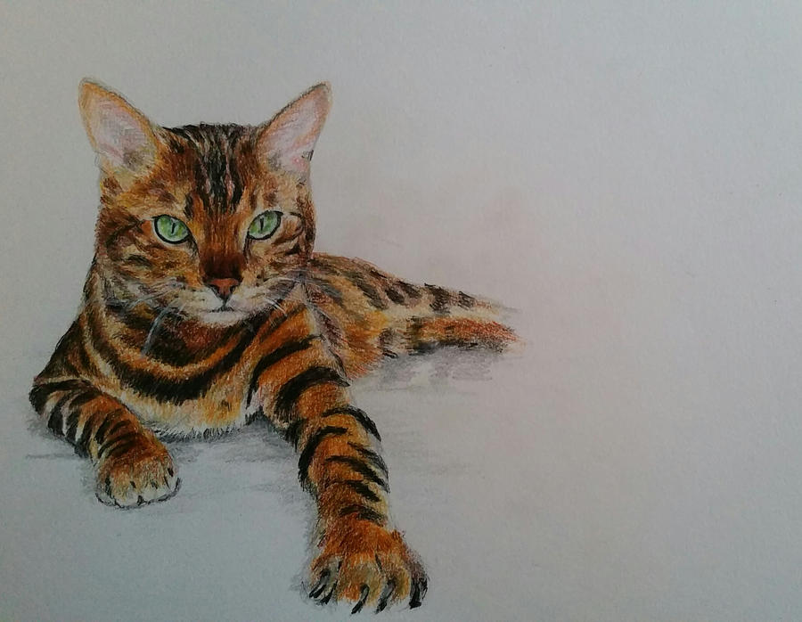 What to know about bengal cats