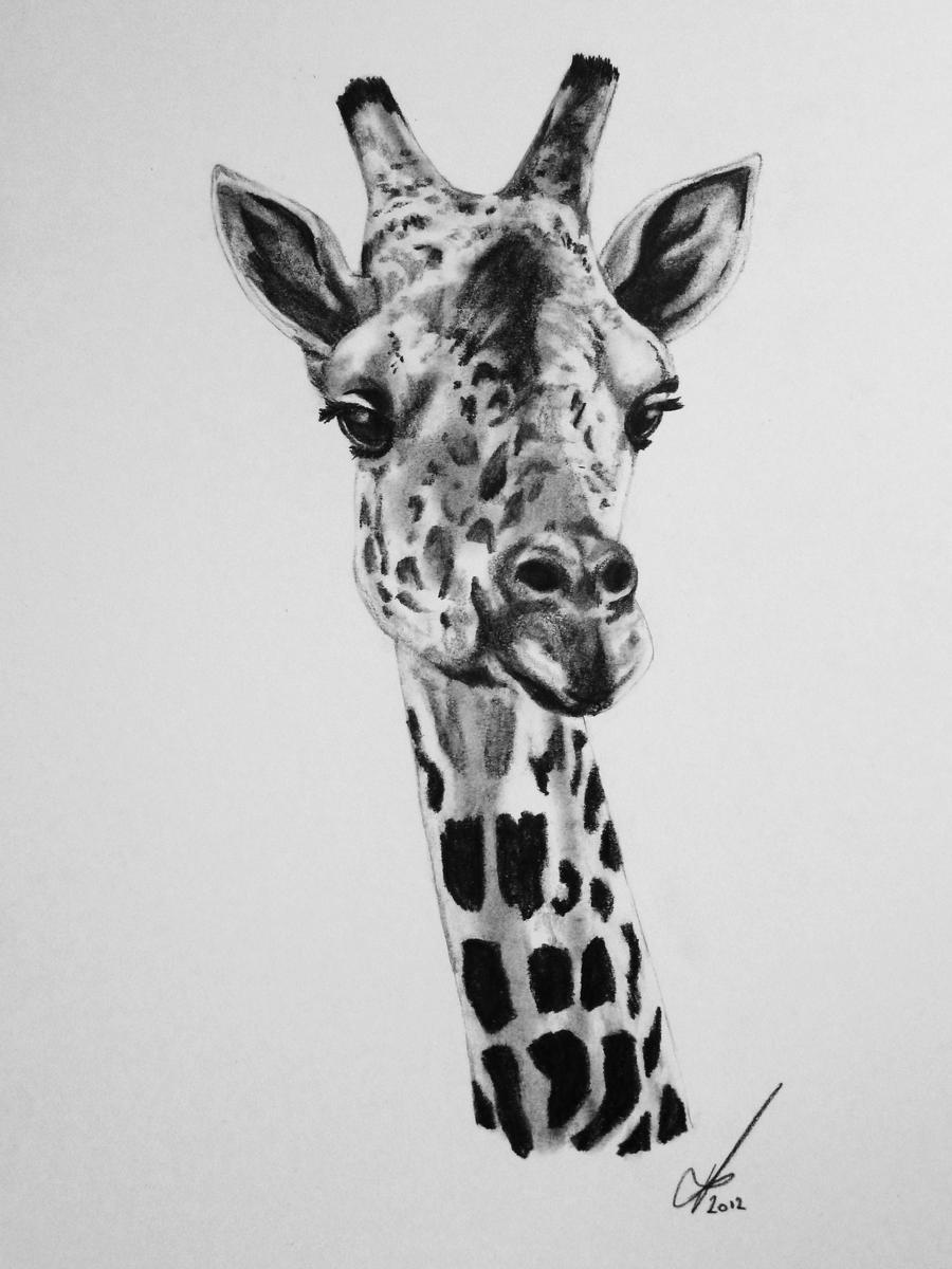 Baby Giraffe by salt25 on deviantART Cool Giraffe Drawing