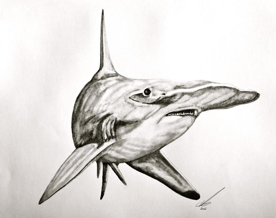 Shark Pencil Drawing
