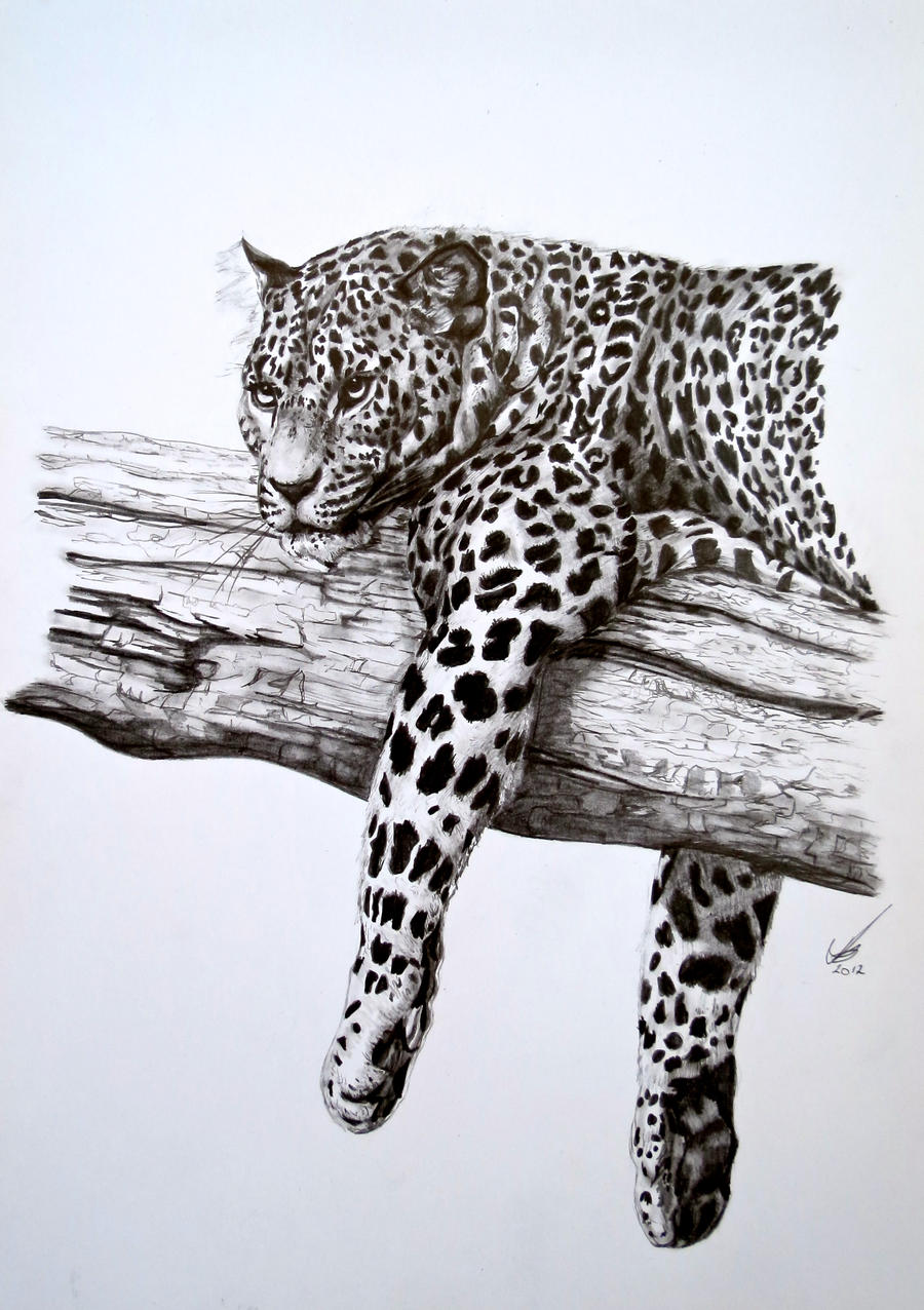 Lounging Leopard by salt25