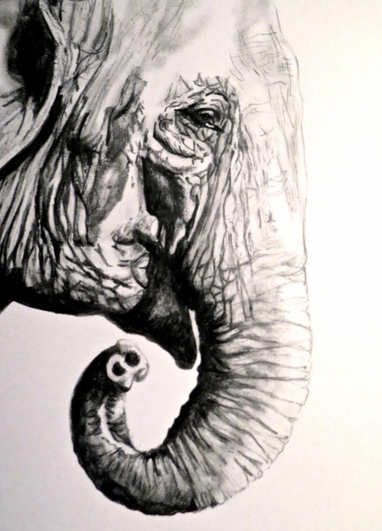 Indian elephant pencil drawing