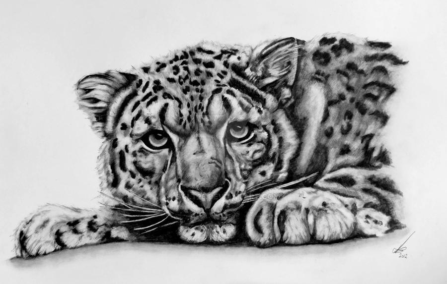Watching (Snow Leopard) by salt25