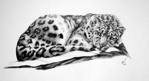 Snow Leopard-Resting