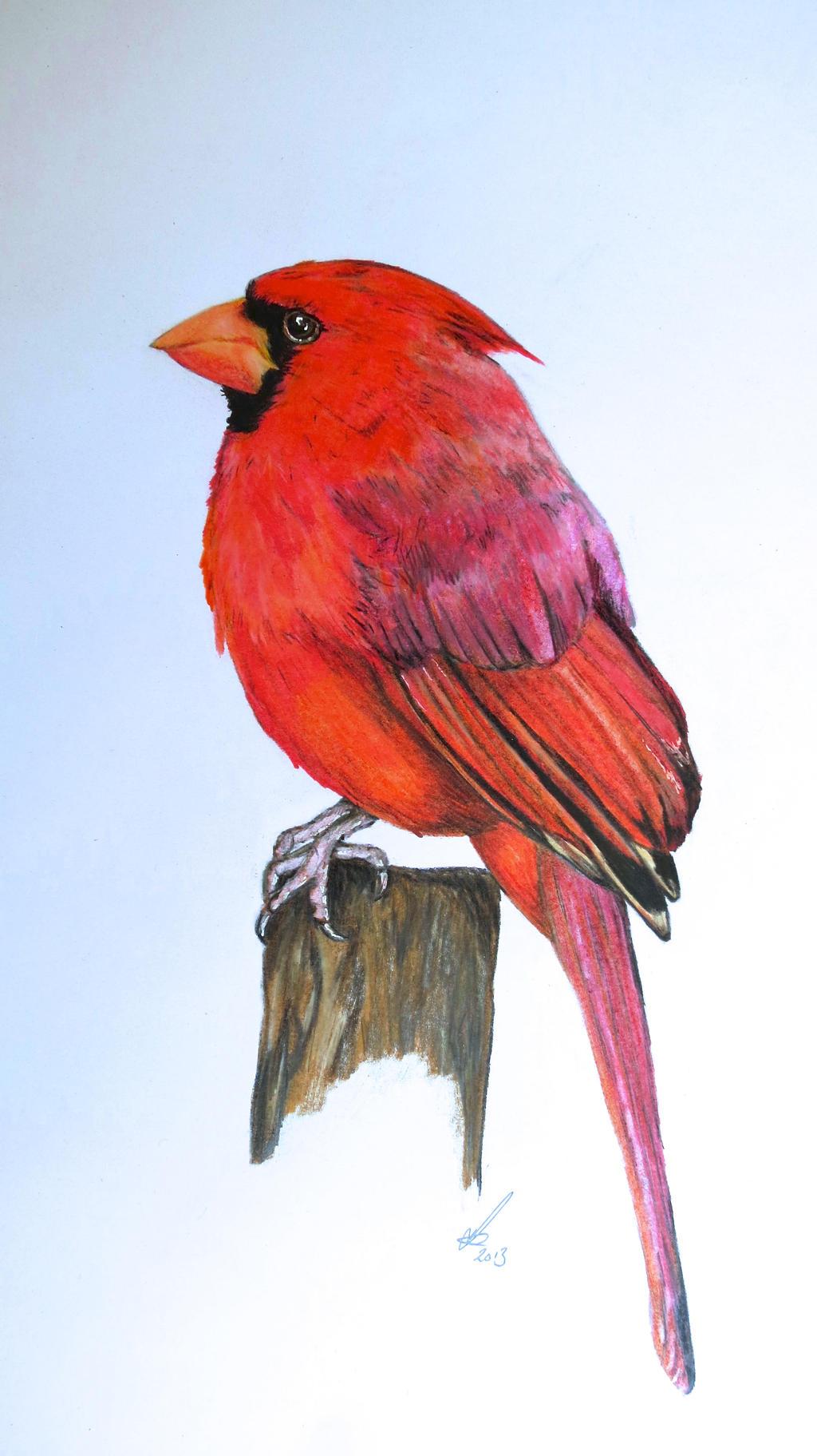 Cardinal by salt25