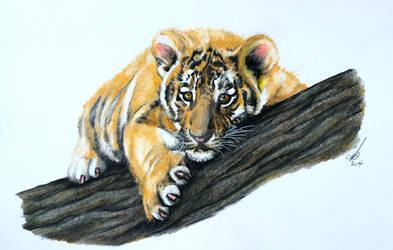 Tiger cub by salt25