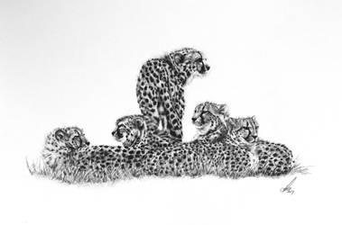 Coalition of Cheetahs