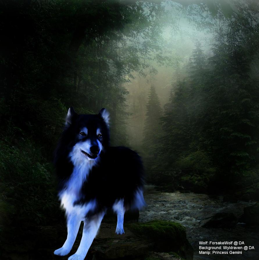 When the children sing, let a new world begin~ Wolf_freebie_by_xxxgeminixxx-d2xpo9p