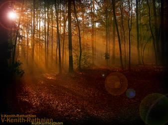 EverOrange Forest 2