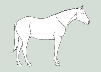horse lineart 3