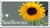 I Love Sunflowers by Paris-Amour