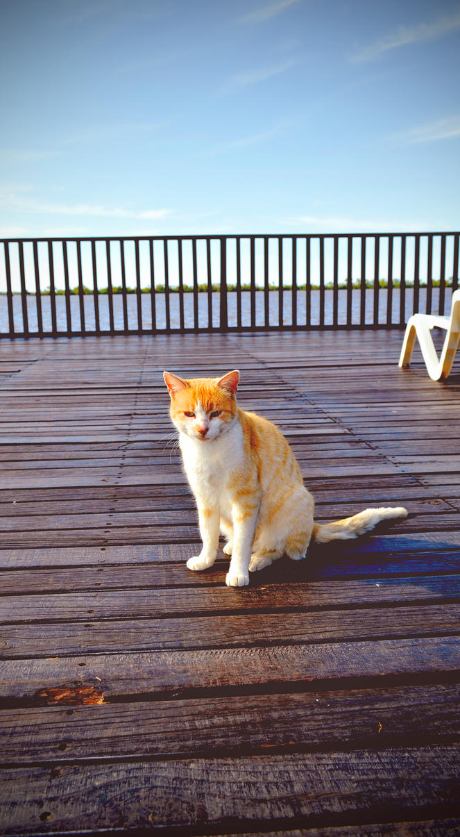 El Gato de la costa by exteban