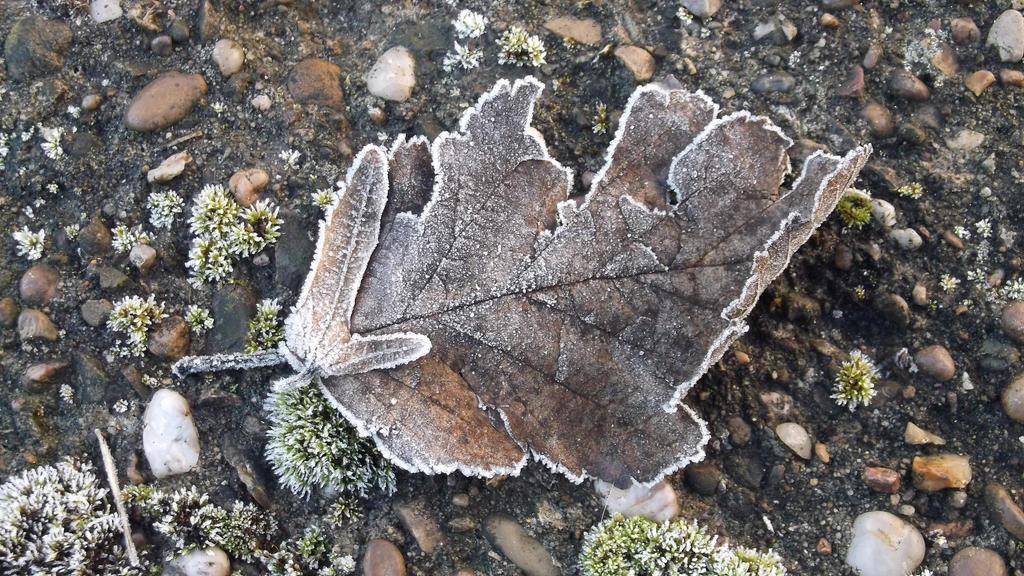 Frozen Leaf by PsychicHexo