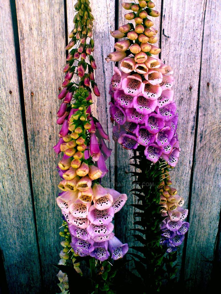 Flowers by MercurioC