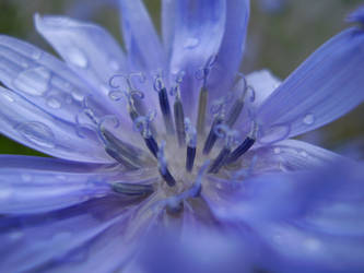 One blue plain flower - 2 by D-o-d