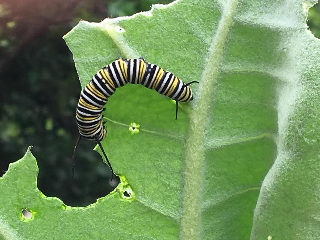 Caterpillar And Leaf by MashyLOL