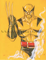 Classic Wolverine 40 by Hodges-Art