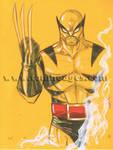 Classic Wolverine 40