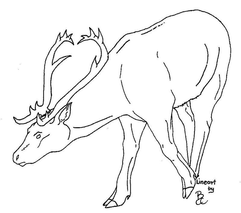 Line Art Deer : Deer line art