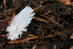 Light as a Feather by wackymanda