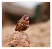 Red Neck Bird by wackymanda