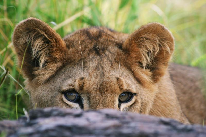 Watchful Eyes by wackymanda