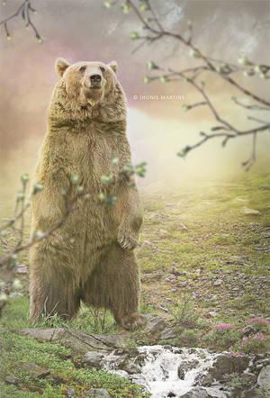 Calm bear by jhonismartins