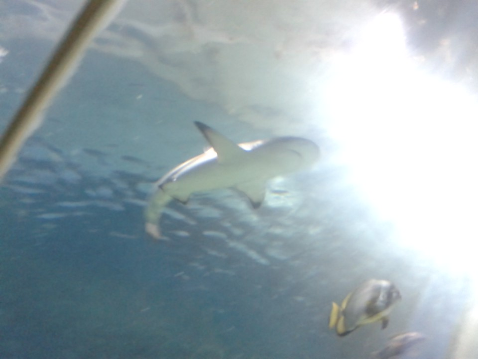 Shark - 12/07/2014 by BluebottleFlyer