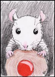 Buisquit Rat by akhira