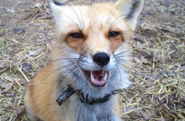 Yeeah maaan by foxalbiazul