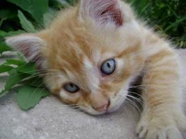 Cat On a Rock